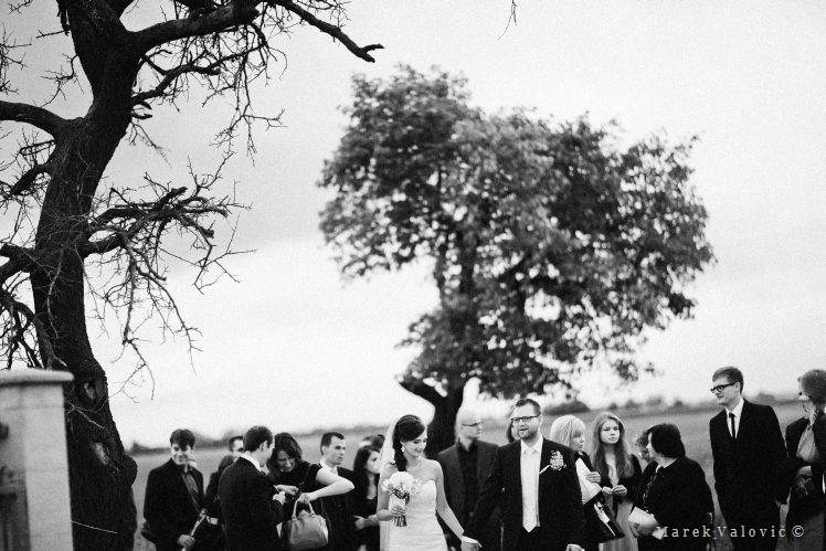 black & white wedding photography old tree