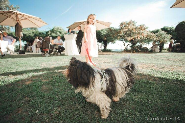 kid with dog on wedding